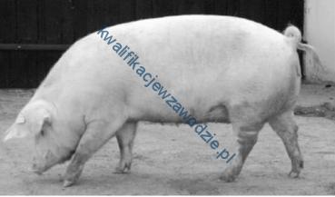 r9_swinia