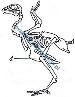 r9_szkielet