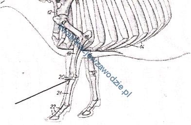 r9_szkielet2