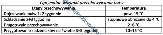 r3_tabela6