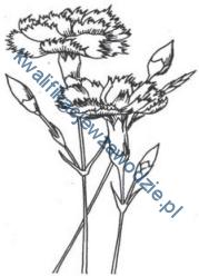 r5_kwiaty
