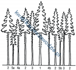 r13_drzewa