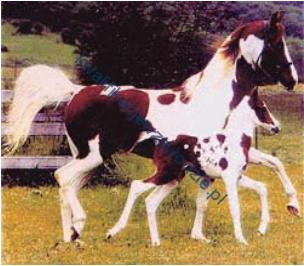 r19_konie
