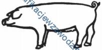 r4_swinia