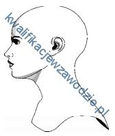 a19_profil2