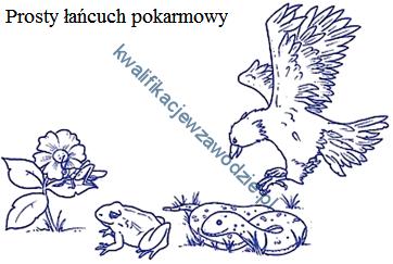 r7_lancuch