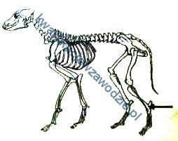 r9_szkielet3